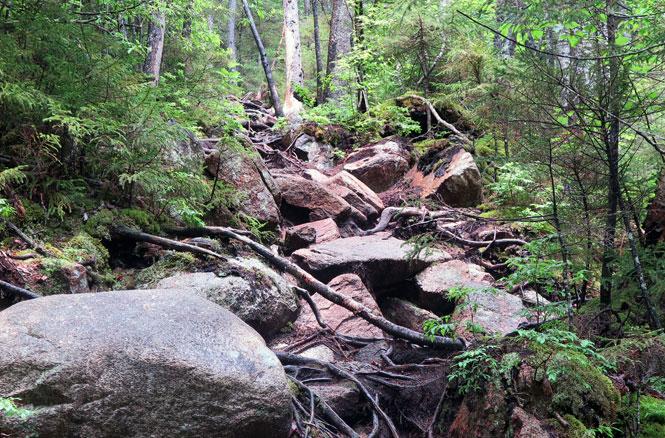 Bemis Brook Trail Climb