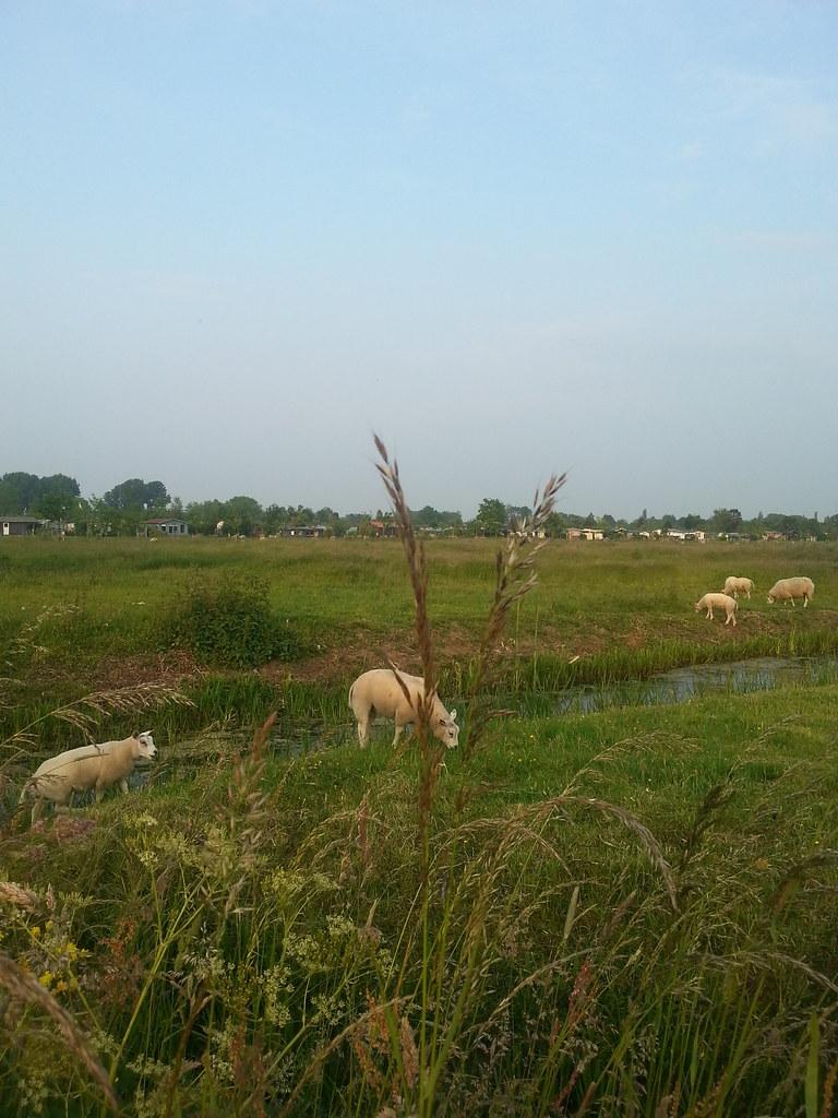 hollannin_maaseutua