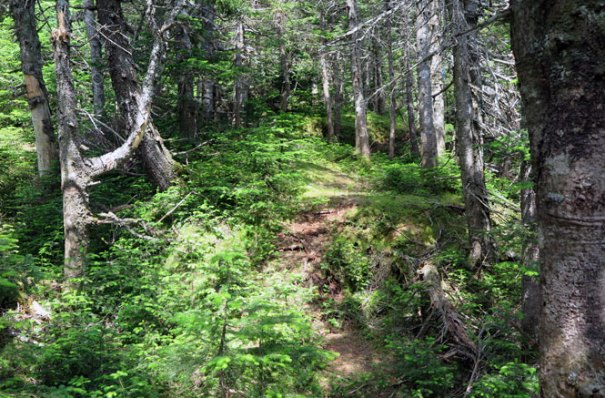 Upper Berry Picker's Trail