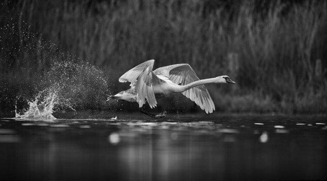 bien-choisir-un-affut-flottant-amar-guillen-photographe-011