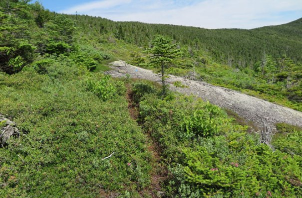 Berry Picker's Trail Crossover