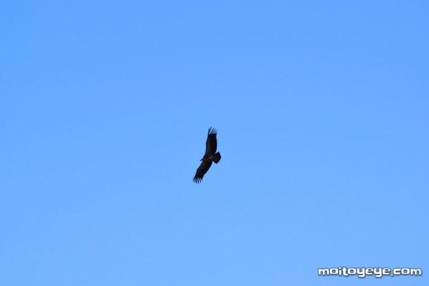 Aves desde el mirador del Alto Tajo Zaorejas