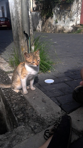 Friendly Cat in Galle Fort Sri Lanka