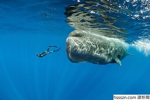 sperm-whales-sleep-franco-banfi-5968a2e809fcc__700_700_467