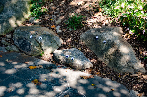 Googly-Eye Bombing Downtown Greenville-77