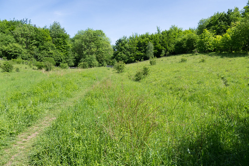 Chalk meadows at Homefield Wood