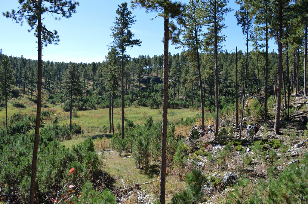 Blackhills National Forest