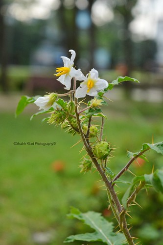 Amazing Flower Photo | Nikon D5200 | Photography | Bangladeshi Flowers | Best Photo
