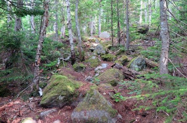 Saddleback Berry Picker's Trail Climb