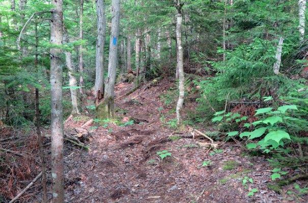 Saddleback Berry Picker's Trail Beginning