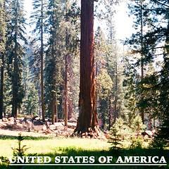 USA_Icon