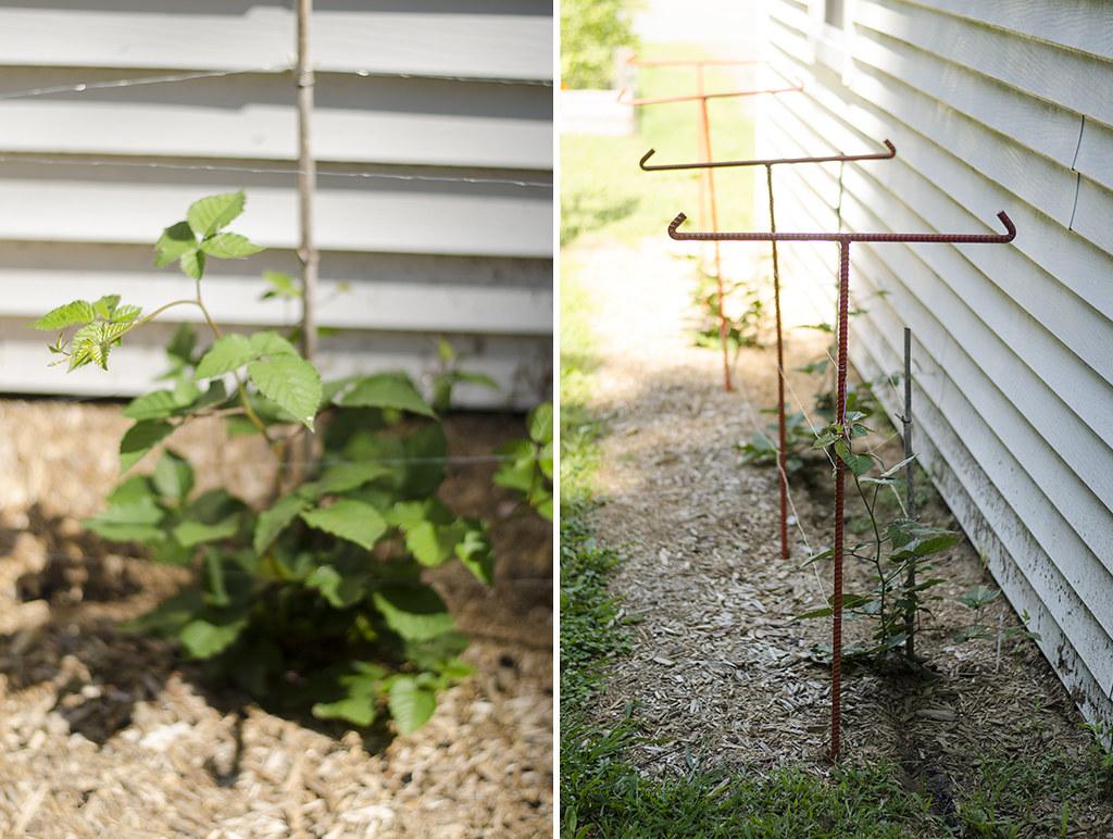 garden 2017 collage 3