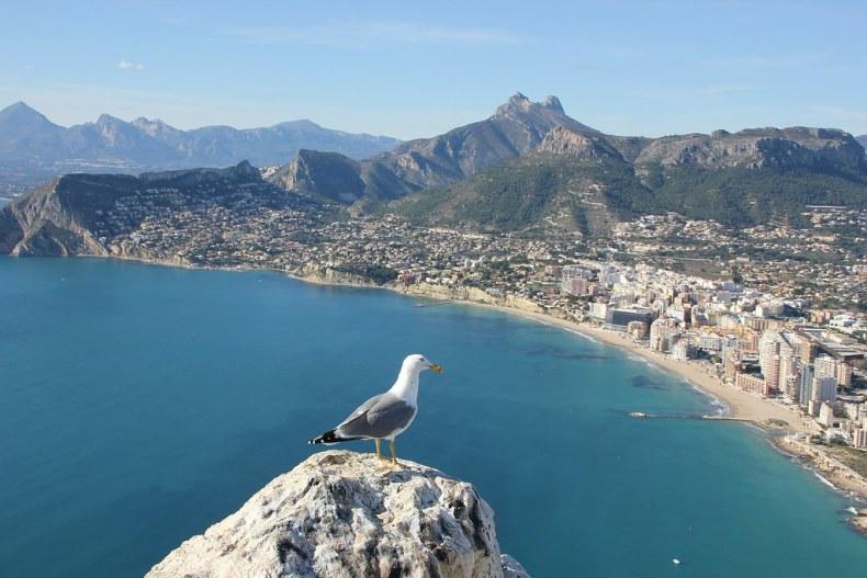 seagull-264075_1920
