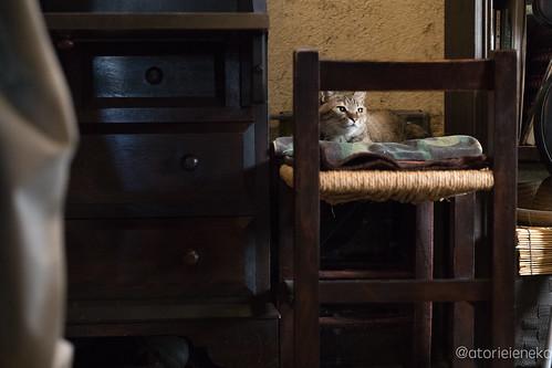アトリエイエネコ Cat Photographer 36154036734_6b394725f0 1日1猫! 喫茶のんのん(大阪市平野区長吉六反2丁目1−7) 1日1猫!  猫写真 猫 子猫 大阪 写真 保護猫 スマホ カメラ Kitten Cute cat