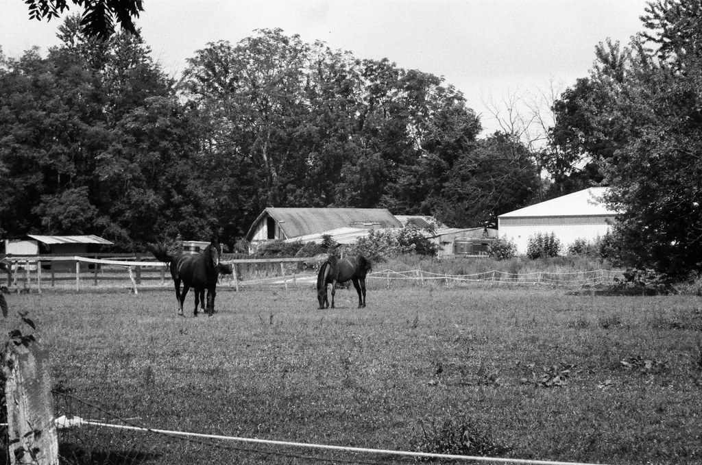 Horses in Augusta