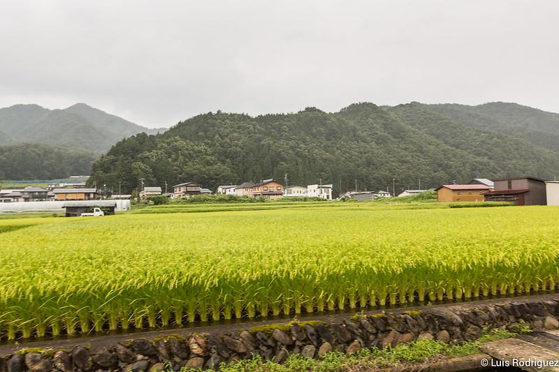 Paseo-bici-Hida-Furukawa-Gifu-12