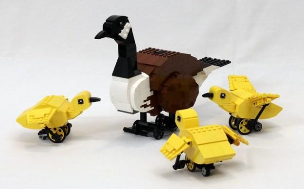 加拿大鹅和幼鹅