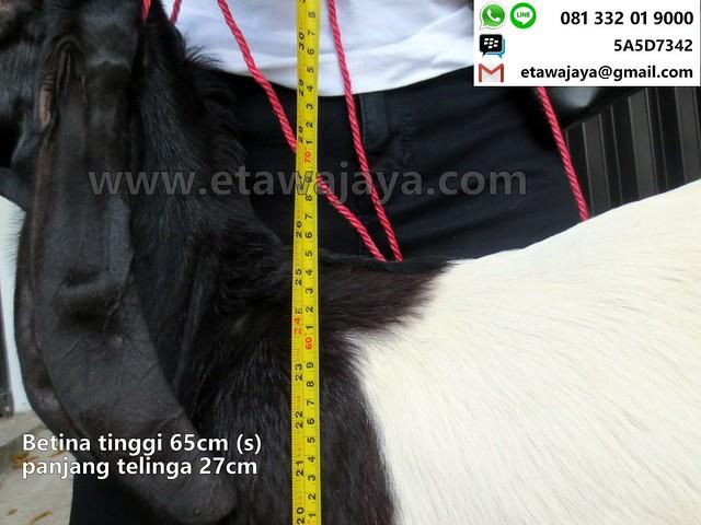 betina-65cm-s-14