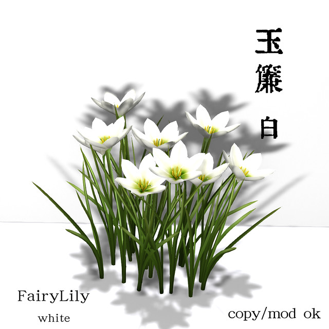 *NAMINOKE*FairyLily - 玉簾 White