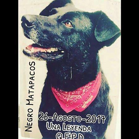 Negro Matapacos QEPD 26082017