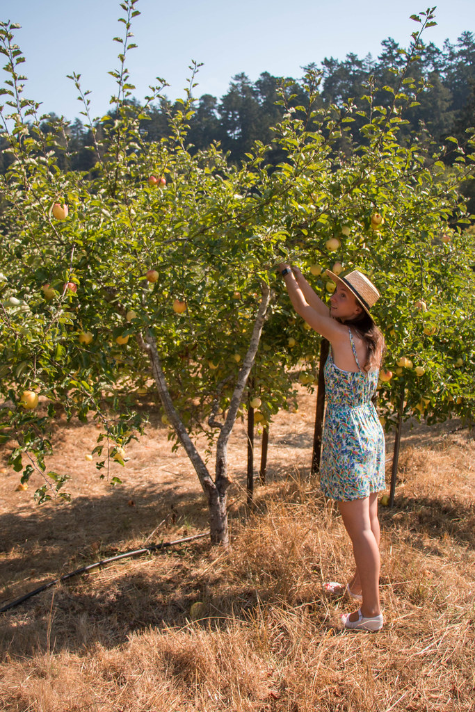 09.02. Swanton Cal Poly Ranch apple picking