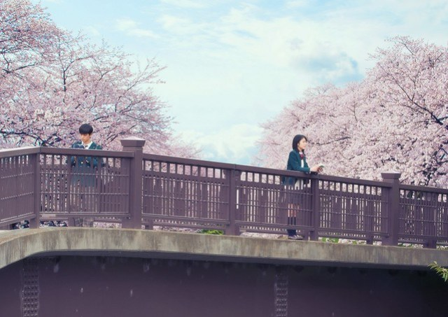 Let Me Eat Your Pancreas Movie Still