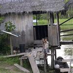 Viajefilos en la Amazonia, Peru 132