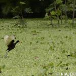 Viajefilos en la Amazonia, Peru 099
