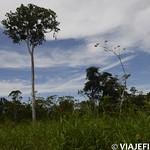 Viajefilos en la Amazonia, Peru 165
