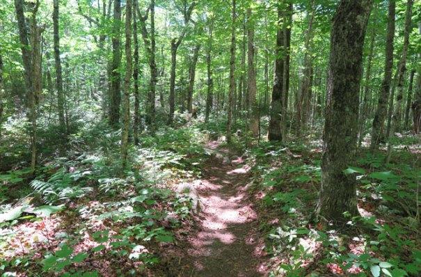 Katahdin Abol Trail Woods