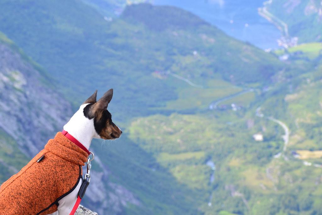 Dalsnibba Dog
