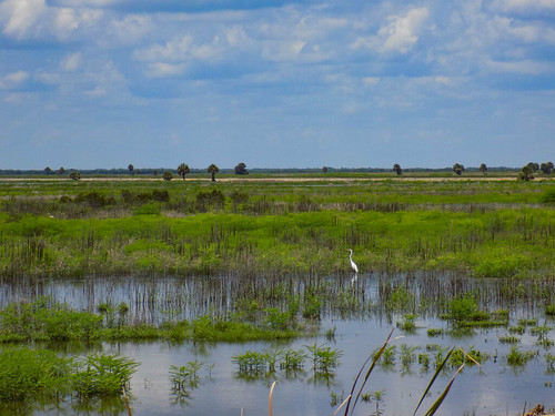 Fellsmere Stick Marsh-4