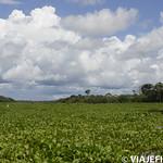 Viajefilos en la Amazonia, Peru 172