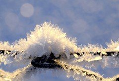crystal chill