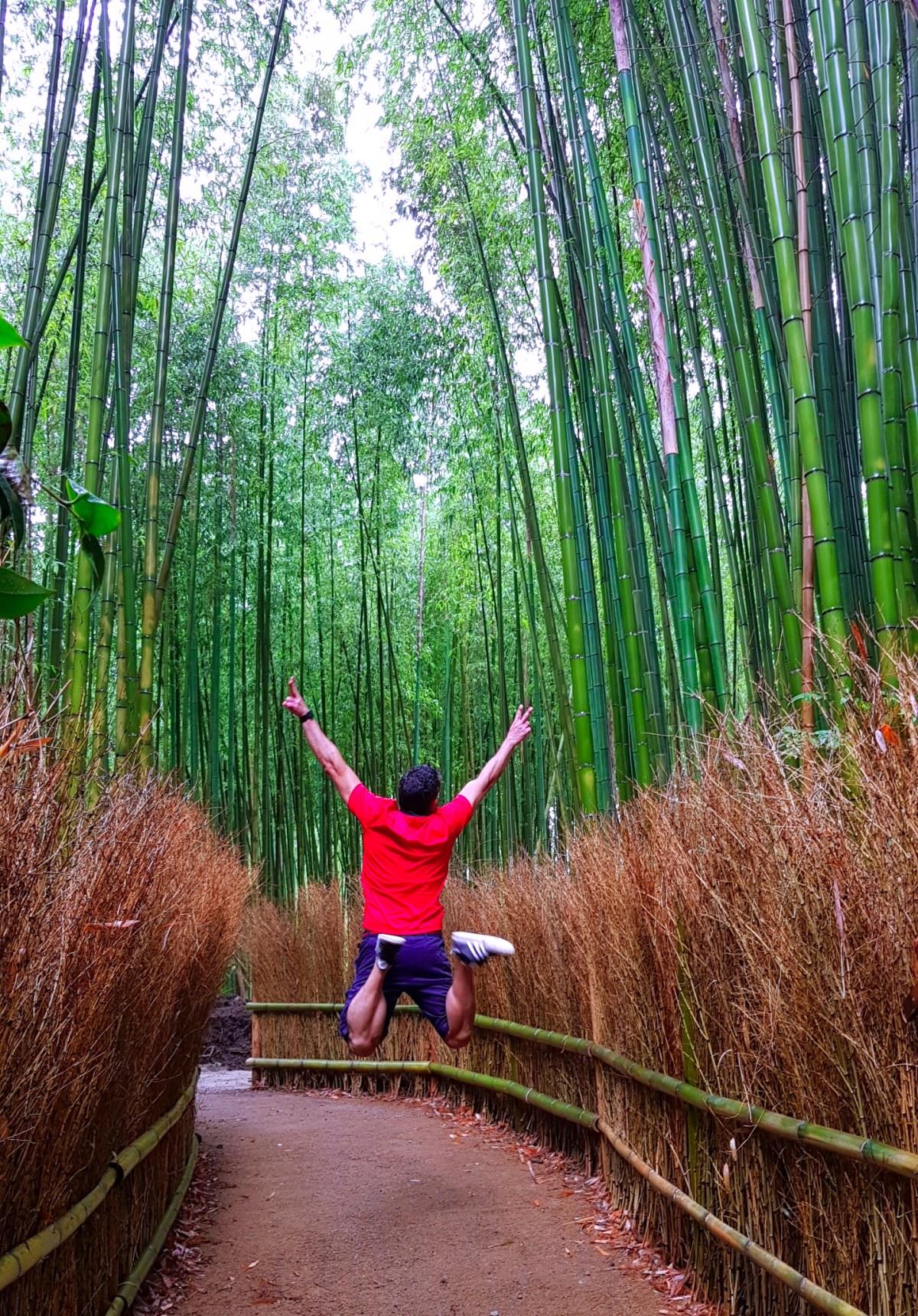 Bosque de Bambú de Kioto / Kyoto - Viajar a Japón - ruta por Japón en dos semanas ruta por japón en dos semanas - 36904412995 642df1a86e o - Nuestra Ruta por Japón en dos semanas (Diario de Viaje a Japón)