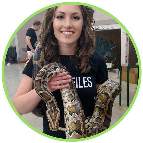 ball python max size