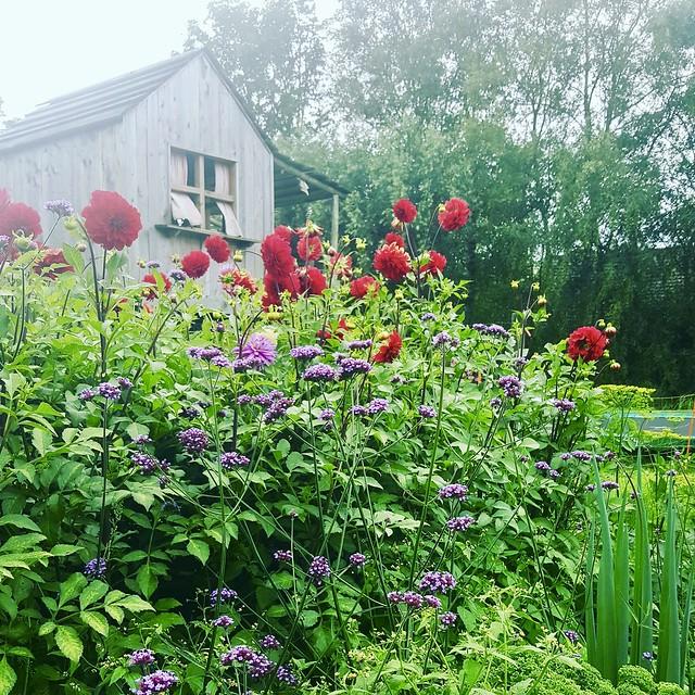 Boerderijtuin met bloemen