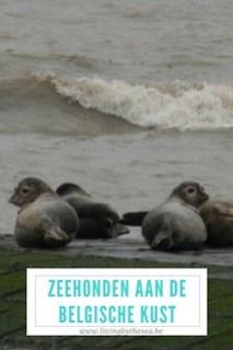 Zeehonden Belgische kust