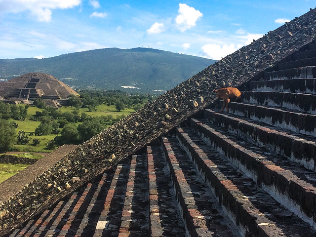 Stray Dog on the Pyramid of the Sun Stairs