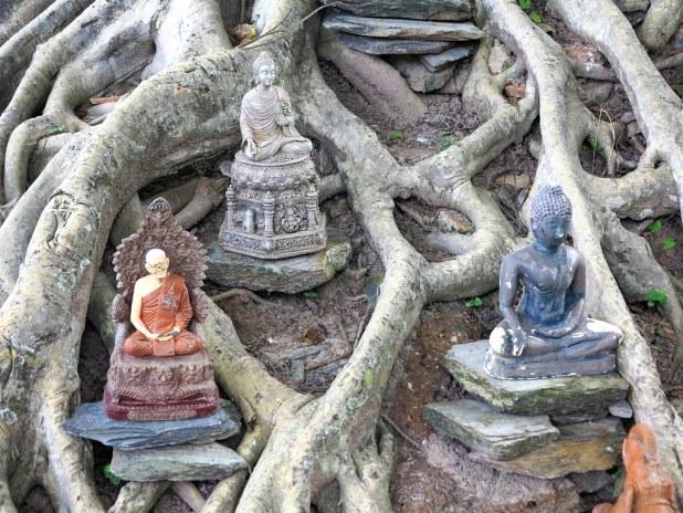 Buda enredado en Sukhothai
