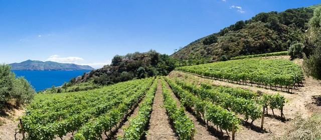 Wein aus Salina