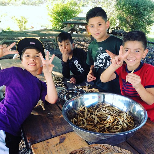 Calling all families! #ALIVE, our farm-based program all about food and how it nurtures us, is starting up next Tuesday - and we've got a few spots open for families to join! It's FREE and every family walks away with a bag of fruits and veggies from the