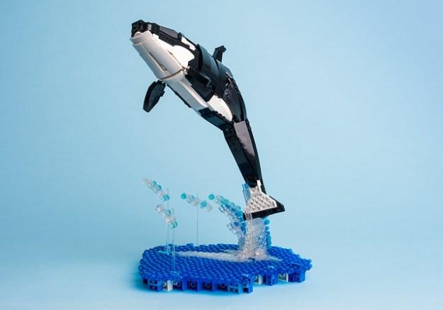 4 Killer whale