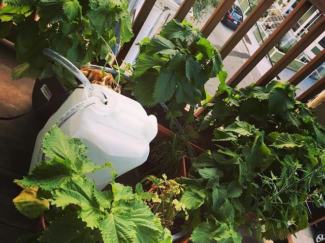 じゃじゃーん!自動水やりマシーン完成ー! Today I made automatic water feeder with #wemo smart plugs! It'll feed water to plants while I'm away. :D