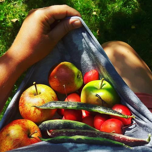 Teenage week and a harvest