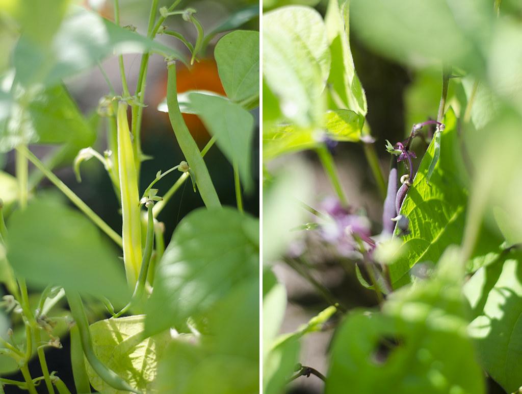 garden 2017 collage 2