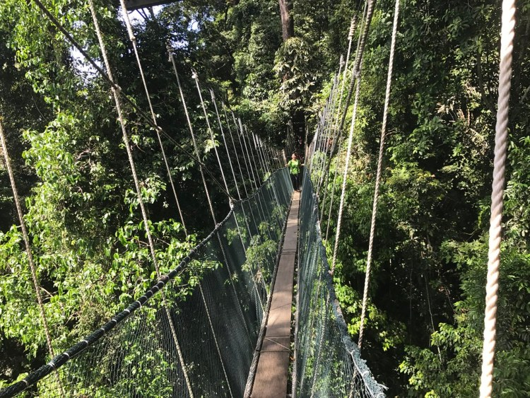 Kinabulu Canopy Walk