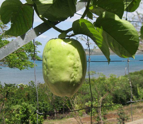 passion fruit varieties