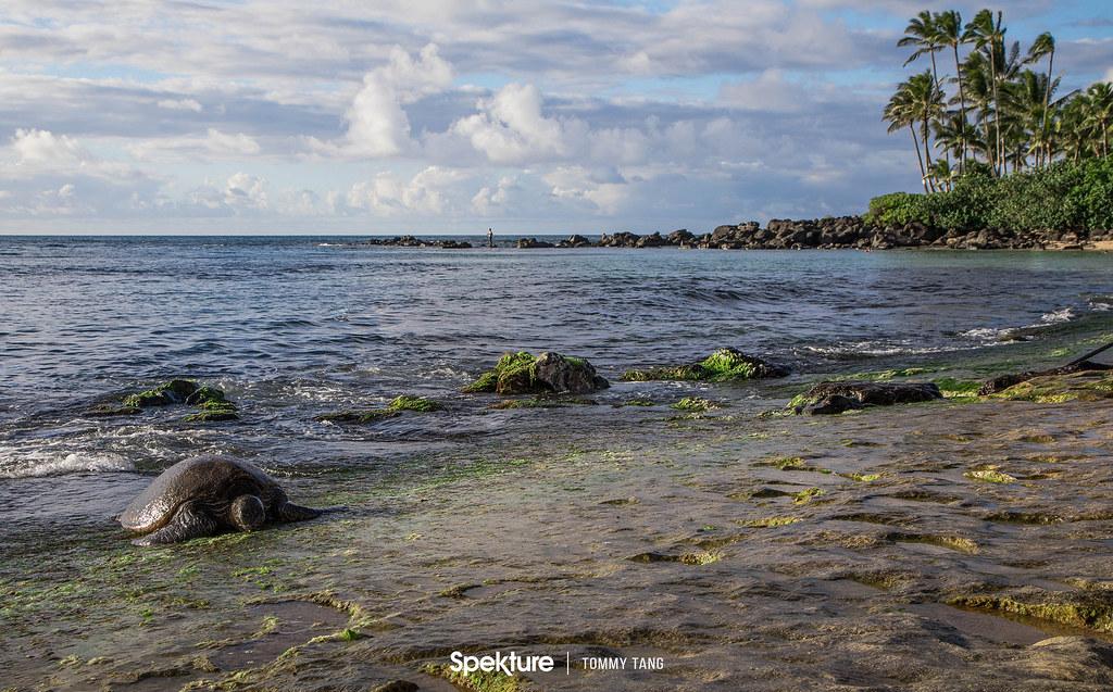 Oahu-15
