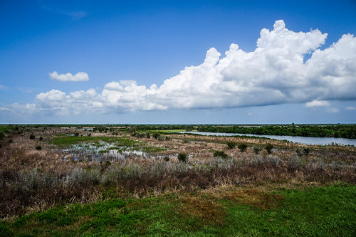 Fellsmere Stick Marsh-27